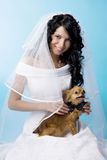 Beautiful brunette bride with a dog Royalty Free Stock Photo