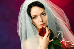 Beautiful brunette bride with a red rose. Studio portrait of a beautiful brunette bride with a red rose in her hands Royalty Free Stock Photo