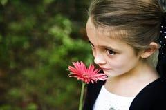 Beautiful Brunette Girl stock photos