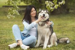 Beautiful brunette girl sitting on the grass with her funny friend malamute dog. Beautiful brunette girl cynologist sitting on the grass and playing with her