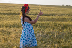 Beautiful brunette lady in wheat field. Royalty Free Stock Photography