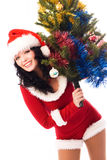 Beautiful brunette woman with a Christmas tree Stock Photography
