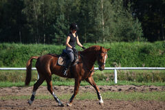 Beautiful brunette woman riding (trotting) chestnut horse Royalty Free Stock Images