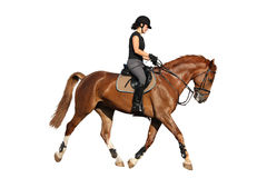 Beautiful brunette woman trotting with chestnut horse isolated o Royalty Free Stock Photography