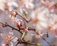 Beautiful budding - buds. New life, awakening of nature - budding buds royalty free stock images