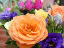 Beautiful budding coulorfull roses. Bunch of beautiful and  colourful budding roses with lush green leaves Stock Images