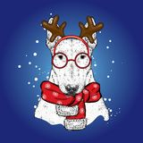 A beautiful bull terrier in a deer suit and a winter scarf. New Year`s and Christmas. Pedigree dog. Stock Photos