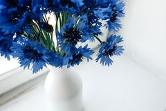 Beautiful bunch of cornflowers in vase on wooden white window si