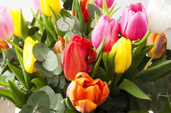 Beautiful bunch of Dutch tulips. A beautiful bunch of Dutch tulips with some eucalyptus leaves Royalty Free Stock Photos