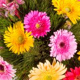 Beautiful bunch of gerberas Royalty Free Stock Image