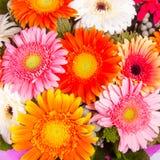 Beautiful bunch of gerberas Stock Image