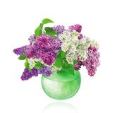 Beautiful Bunch of Lilac in the Vase Stock Photo