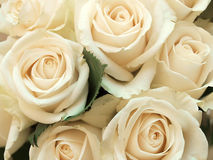 Beautiful bunch of roses Stock Images