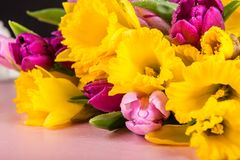 Beautiful Bunch of Tulips and yellow Daffodils on the Pink Backg stock photos