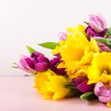 Beautiful Bunch of Tulips and yellow Daffodils on the Pink Backg stock image