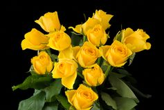 Beautiful Bunch Yellow Roses isolated on a black background. A beautiful bunch of yellow roses on a black background The image is bright and vibrant with space Royalty Free Stock Photos