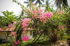 Beautiful bungalow resort in jungle with flowers, Stock Photo