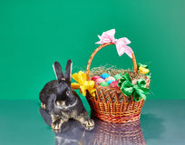 Beautiful bunny and Easter basket on a green background Stock Photos
