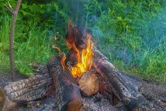 Beautiful burning logs Stock Photo