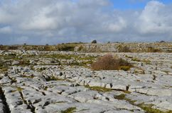 Beautiful Burren landscape with a field of stones. Beautiful Burren landscape with a field of gray stones and rocks Royalty Free Stock Images