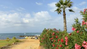 Beautiful bush with flowers and palm against sea background. Beautiful bush with pink flowers and palm behind it against sea background. Camera moves from right stock video