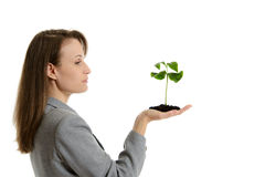 Beautiful business woman holding a green plant in a pot Royalty Free Stock Photography