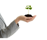 Beautiful business woman holding a handful of earth with a new p Royalty Free Stock Images