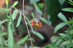 Beautiful Butterfiy On The Flower