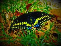 Beautiful butterflie Stock Photo