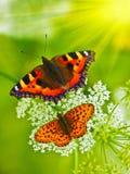 Beautiful butterflies Stock Photos