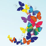 Beautiful butterflies Royalty Free Stock Image