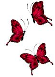 Beautiful butterflies. On a white background Stock Illustration