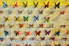 Beautiful Butterflies Royalty Free Stock Photos