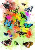 Beautiful butterflies on colorful spray paint. royalty free stock image