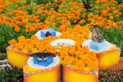 Beautiful butterflies in the feeding area Stock Photos