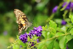 Beautiful butterflies and flowers stock photography