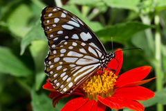 Beautiful butterflies Stock Photo