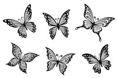 Beautiful butterflies insects Stock Photo