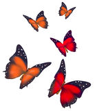 Beautiful butterflies isolated on white background Stock Photos