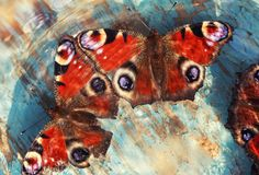 Beautiful butterflies of peacock eye sitting on a wooden blue pa Royalty Free Stock Image
