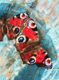 Beautiful butterflies of peacock  sitting on a wooden blue paint Royalty Free Stock Photo