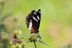 Beautiful butterflies perched. On wild flowers with attractive colors and pamper the eyes stock photo