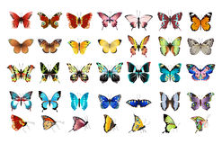 Beautiful butterflies set. Beautiful colorful butterflies set on white background stock illustration