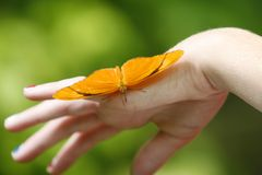 Beautiful Butterfly. Beautiful vibrant orange butterfly resting on a young childs hand Stock Photo