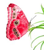 Beautiful butterfly Stock Photos