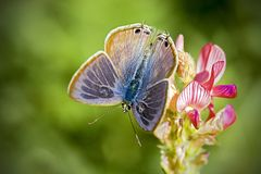 Beautiful Butterfly Royalty Free Stock Photo