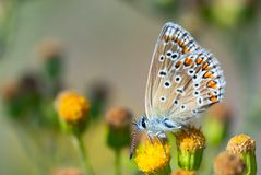 Beautiful butterfly Royalty Free Stock Photography