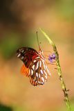 Butterfly on plant. Side view of butterfly on plant, nature background Royalty Free Stock Images