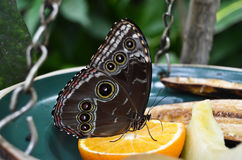 A beautiful butterfly Stock Photos
