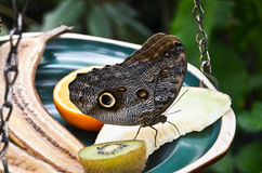 A beautiful butterfly Stock Photography